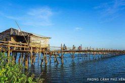 Quảng diễn Cá Ngừ Đại Dương từ Ngư Trường Phú Yên tại TPHCM